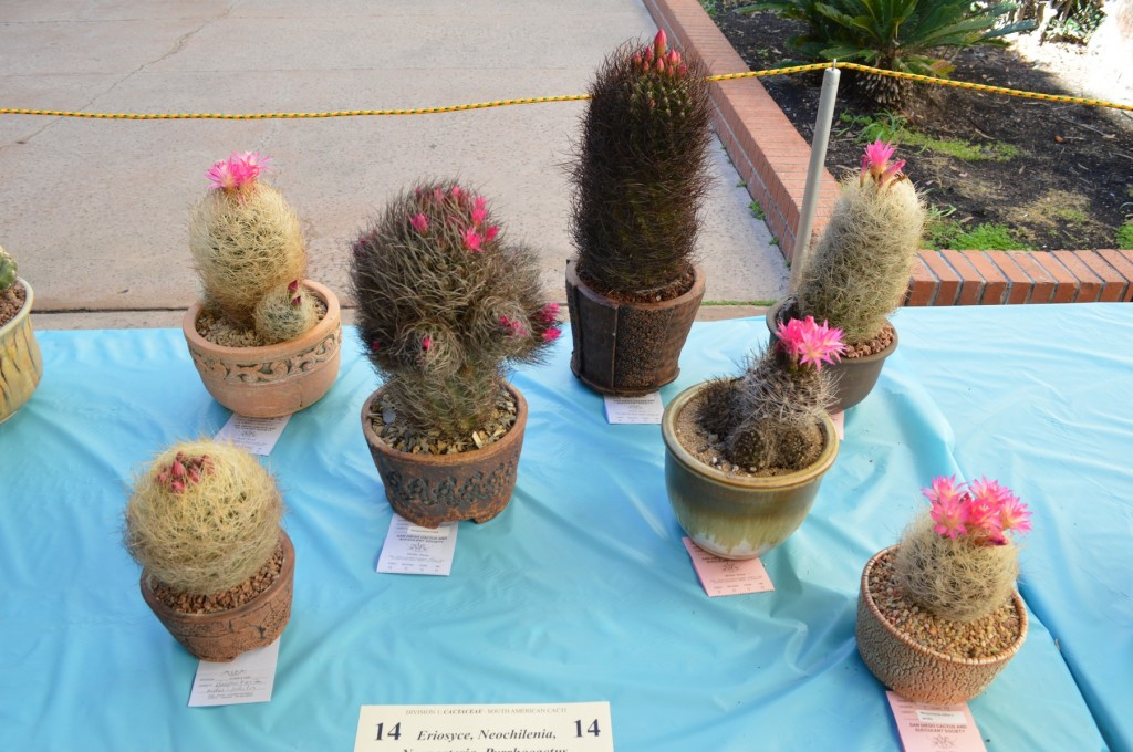 SDCCS Cactus Display