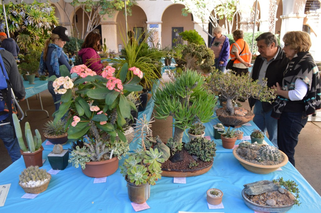 San Diego Cactus and Succulent Society Winter Show