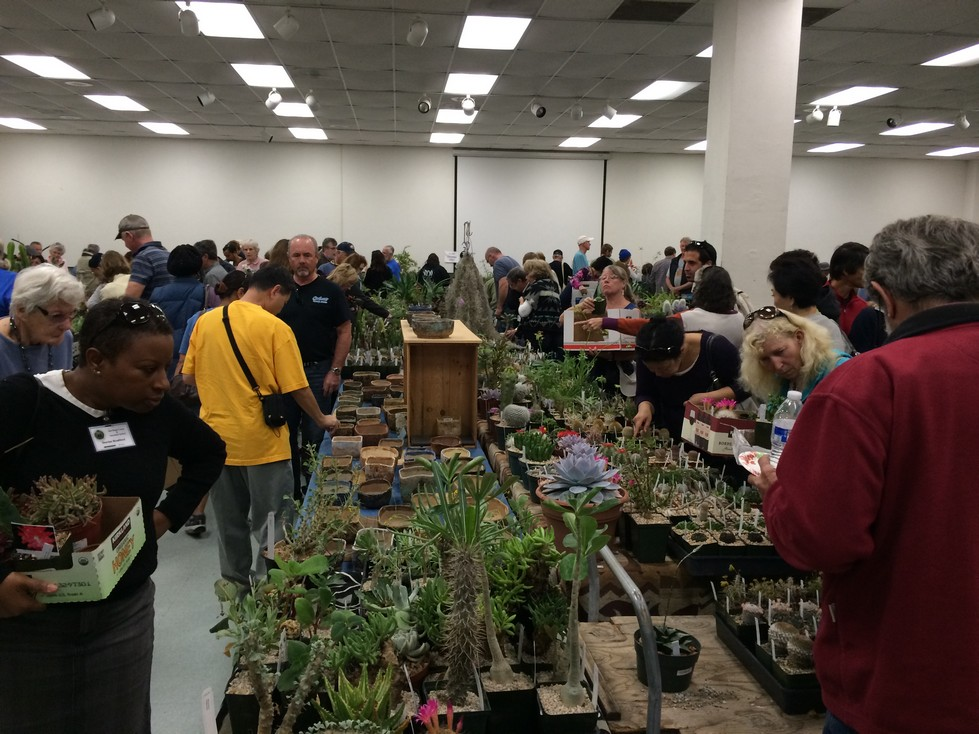 SDCSS Cactus Succulent Society Sale