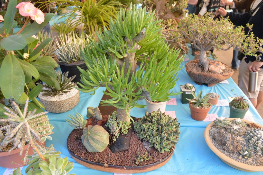 SDCSS Succulent Display