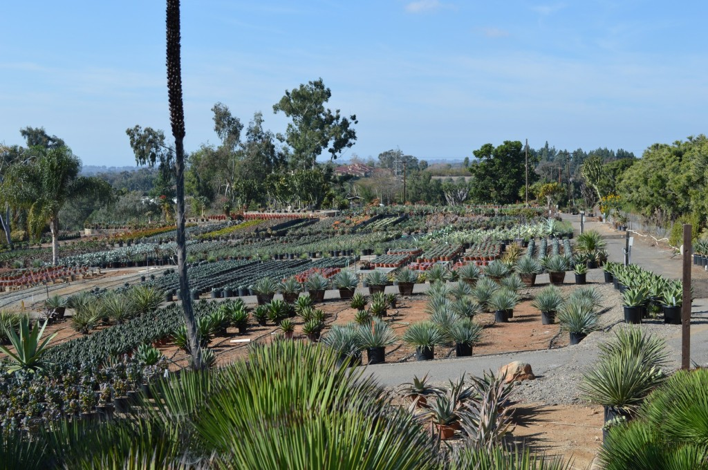 Upper Lot Aloe and Agave Section