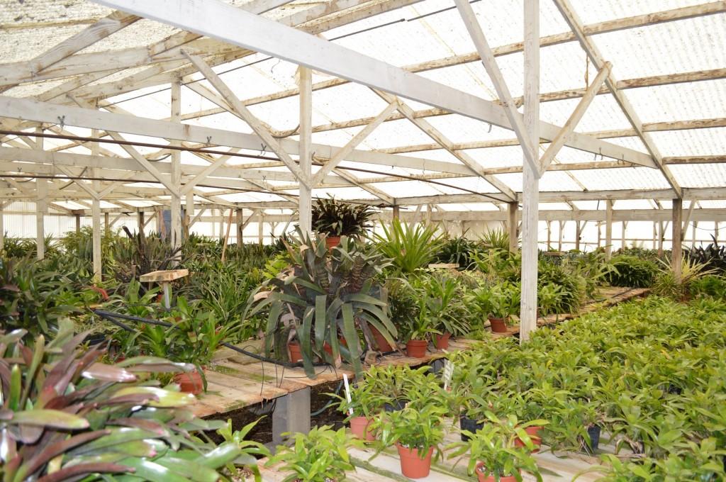 Rancho Soledad Bromediad Greenhouse