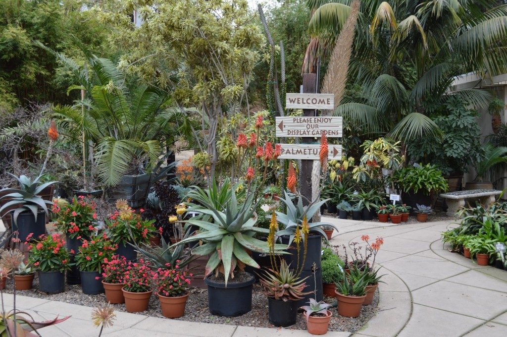 Rancho Soledad Nursery Weekend Display