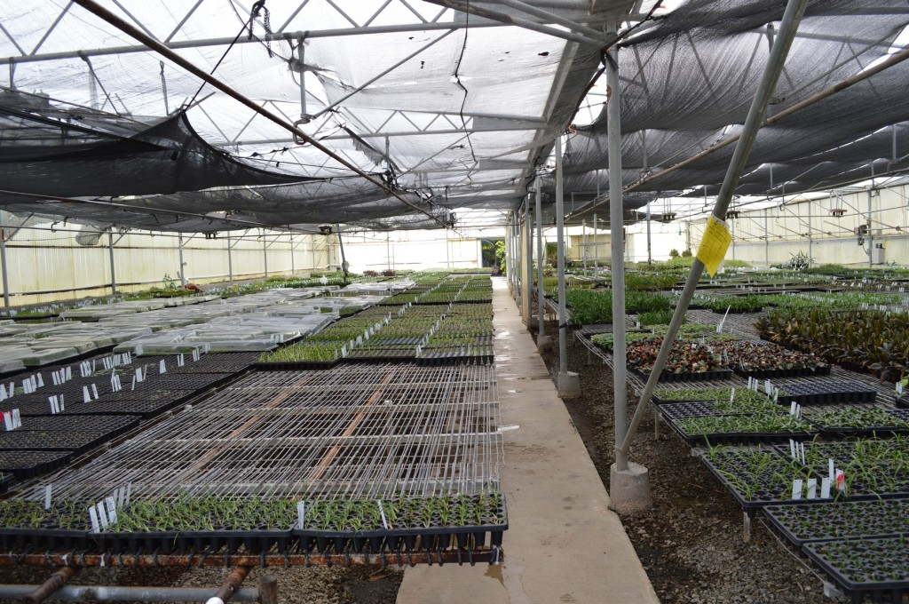 Rancho Tissue Culture Greenhouse